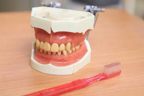 定期検診でメンテナンス 歯磨き指導で健康維持をめざす